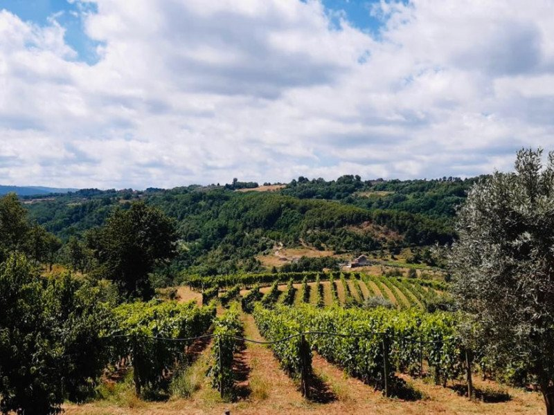 Viaggiart: Summer in the vineyard, journey in the hills of Donnici